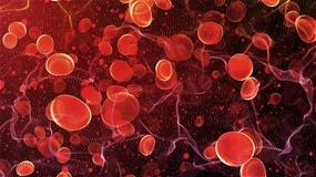 Red blood cells travel artery